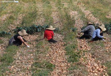 Të gjitha tokat bujqësore me qira, qeveria kërkon investitorë