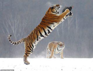 Fotot më të bukura dhe më qesharake të kafshëve (Foto)