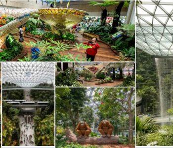 Brenda Aeroportit në Singapor, pamjet një magji e vërtetë (Video & Foto)