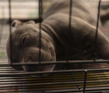 Bashkimi Europian merr masa shtrënguese kundër trafikimit të kafshëve shtëpiake (VIDEO)