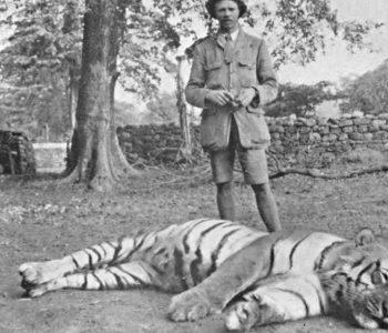 """Si u vra Tigri që """"hëngri"""" 436 njerëz"""