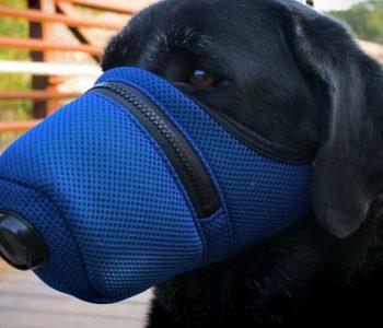 Rasti i parë në botë! Një qen rezulton me koronavirus