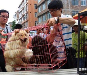 Historike/ Kina rishikon dietën ushqimore, heq dorë nga qentë për arsye evolucioni
