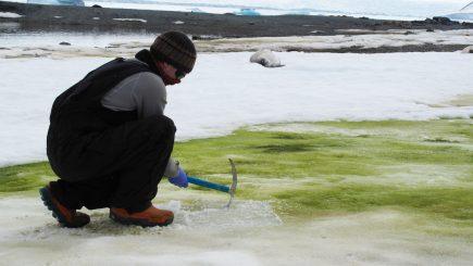 """Shkencëtarët të shqetësuar, rritja e temperaturave po e bën Antarktidën """"të gjelbër"""" (Foto)"""